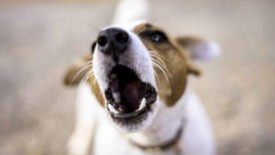 شایع ترین مشکلات رفتاری در سگ ها | دام و پت