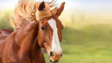 10 اشتباه بزرگ در هنگام خرید اولين اسب | دام و پت