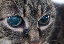 آب سیاه در گربه 2 | دام و پت