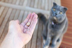 پردنیزولون برای سگ ها و گربه ها | دام و پت