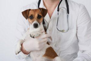 تست های آزمایشگاهی رایج در دامپزشکی | دام و پت