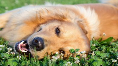 گرمازدگی در گربه ها و سگ ها | دام و پت