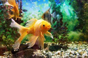 آیا ماهی ها به واکسیناسیون نیاز دارند؟ | دام و پت