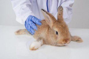 لنگیدن خرگوش 2 | دام و پت