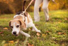 رفتارهای دردسر ساز سگ خانگی   دام و پت