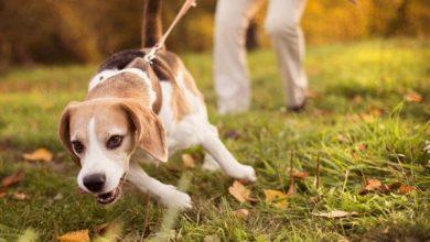 رفتارهای دردسر ساز سگ خانگی | دام و پت