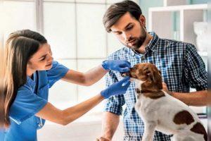 خون دماغ در سگ ها | دام و پت