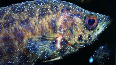 بیماری های ماهی آکواریوم آب شور | دام و پت