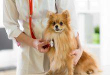نارسایی قلبی در سگ ها   دام و پت