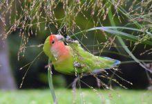 5 راه برای شاد و سالم نگه داشتن پرندگان | دام و پت