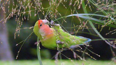 5 راه برای شاد و سالم نگه داشتن پرندگان   دام و پت