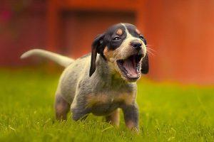 انواع صداهای سگ را بشناسید. | دام و پت