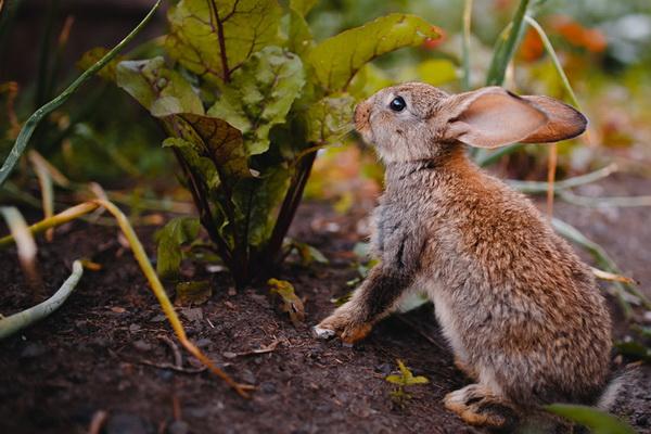 چرا برخی خرگوش ها وزن کم می کنند؟ | دام و پت