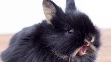 چرا خرگوش ها گاز می گیرند؟   پزشکت