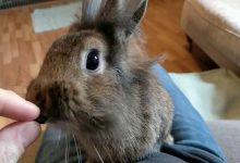 آیا کشمش برای خرگوش بی خطر است؟ | دام و پت
