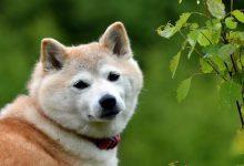 10 نژاد سگ که زیاد عمر می کنند. | دام و پت