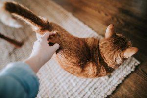 زبان بدن دم گربه را یاد بگیرید. | دام و پت