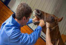 علائم مشکلات دندانی اسب ها   دام و پت