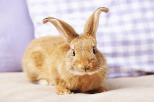 آیا خرگوش ها کلمات را درک می کنند؟   دام و پت