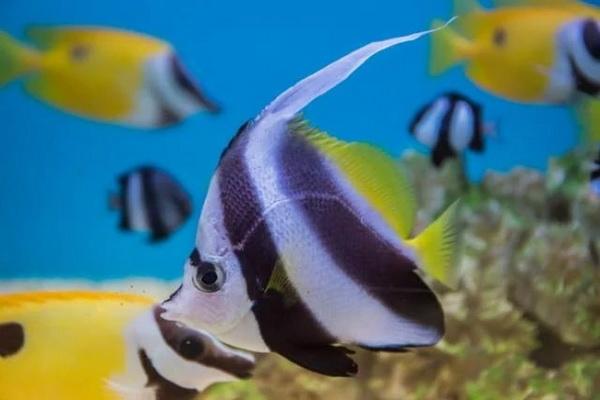شایع ترین بیماری های ماهی آنجل   دام و پت