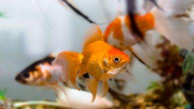 علائم بیماری در ماهی آب شور | دام و پت
