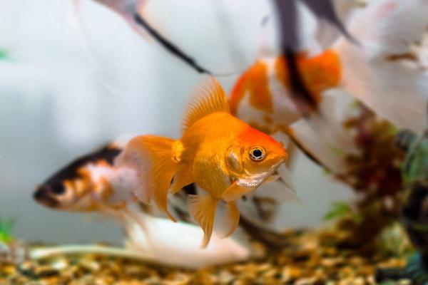 علائم بیماری در ماهی آب شور   دام و پت