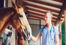 درمان بیماری های پوستی اسب | دام و پت