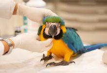 تشخیص تومور در پرندگان   دام و پت