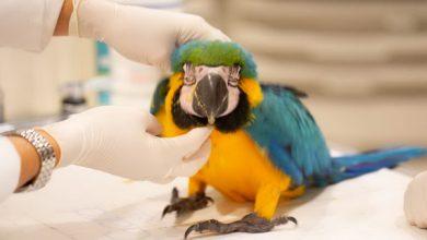 تشخیص تومور در پرندگان | دام و پت