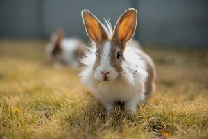 چگونه یک خرگوش مضطرب را آرام کنیم؟   دام و پت