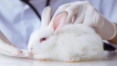 انواع مدفوع طبیعی و غیر طبیعی خرگوش   دام و پت