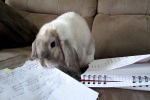 علت زیاد غذا خوردن خرگوش چیست؟ | دام و پت