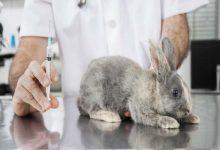 کدام دارو برای خرگوش ها مناسب است؟ | دام و پت
