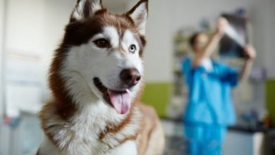 علائم آرتروز در سگ ها، را جدی بگیرید. | دام و پت