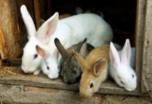 خرگوش ها چند سال عمر می کنند؟ | دام و پت