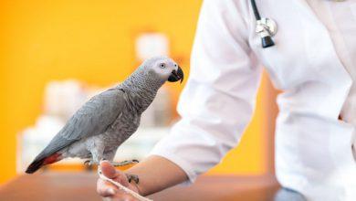 اختلالات ریه در پرندگان خانگی | دام و پت