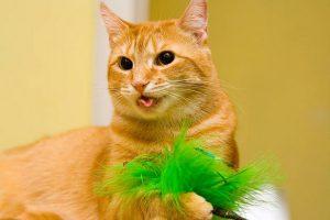 سرفه گربه و 11 علت شایع آن | دام و پت