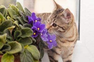 11 علل مهلک اسهال در گربه ها را جدی بگیرید.   دام و پت