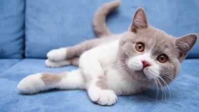 12 کاری که گربه ها از آنها متنفرند. | دام و پت