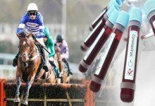 آیا اسب به کرونا مبتلا می شود؟ | دام و پت