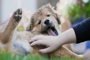 کرم های انگلی در سگ ها، انواع کرم ها و علائم آنها | دام و پت