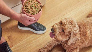 غذای خانگی سگ | دام و پت