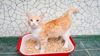 اسهال گربه ، علائم و درمان آن | دام و پت