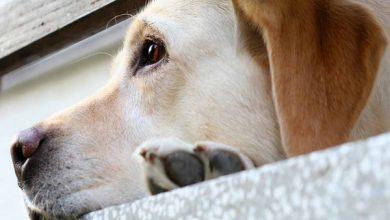 آیا سگ به سالمونلا مبتلا می شود؟ | دام و پت
