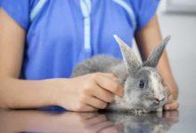 جرم گوش در خرگوش | دام و پت