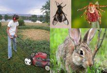 بیماری تولارمیا یا تب خرگوش چیست؟ | دام و پت