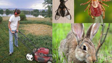 بیماری تولارمیا یا تب خرگوش چیست؟   دام و پت
