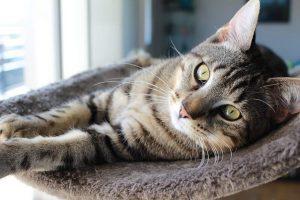 عفونت ادراری در گربه ها، از علائم تا درمان | دام و پت