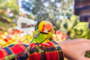 چگونه مرغ عشق را اهلی و رام کنیم؟   دام و پت