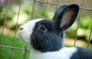 چرا خرگوش من آب نمی نوشد؟ | دام و پت